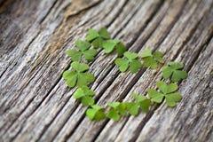 Afortunado no amor: coração do trevo no fundo de madeira Imagem de Stock