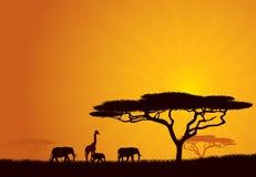 Afracan Hintergrund Stockfotos