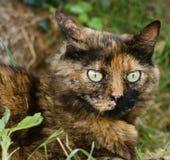 Afraid cat Stock Image