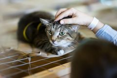 Afraid homeless alone cat with frightened look, lying on cage in shelter waiting for home, for someone to adopt him. Girl volunteer tries to calm and support stock images