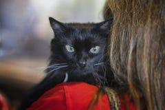 Afraid homeless black cat on shoulder of girl volunteer in shelter for homeless animals. Girl takes cat to her home. Afraid homeless black cat on the shoulder of Royalty Free Stock Images