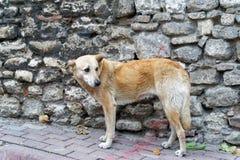 Afraid street dog. Poor street dog afraid of people Stock Image