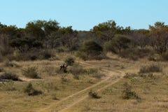 Afrcian bushveld landscape Stock Photography