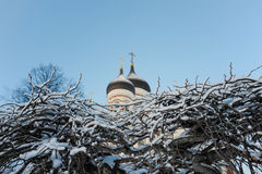 Afresh winter Royalty Free Stock Image