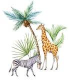 Afriacnan σύνθεση Watercolor ελεύθερη απεικόνιση δικαιώματος