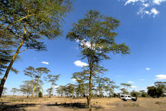 africa Zdjęcia Stock