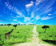 Africa Stock Images