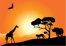 Africa Royalty Free Stock Photos