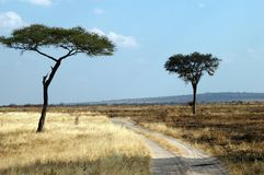 Africa. N road in a nat park stock photo