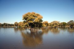 Africa. A tree in a pan of water in Botswana Stock Photography