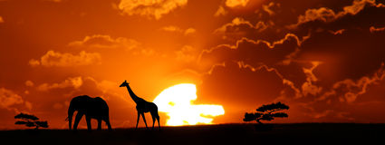 Africa. N Sunset landscape with elephant and giraffe