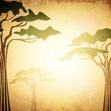 Africa Abstract Acacia Tree Background Stock Images