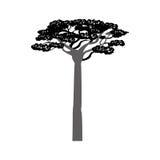 Africa acacia tree Royalty Free Stock Photo