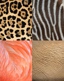 Africa animal pattern texture skin,fur & feathers. Abstract africa animal pattern texture of skin, fur and feathers.. Tiles show elephant skin, leopard fur Royalty Free Stock Photography