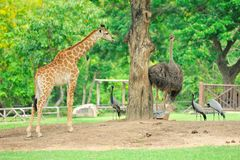 Africa animals Royalty Free Stock Photography