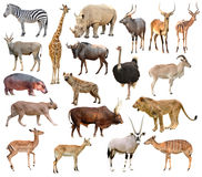 Free Africa Animals Royalty Free Stock Images - 53370729