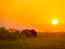 Africa Background Royalty Free Stock Images