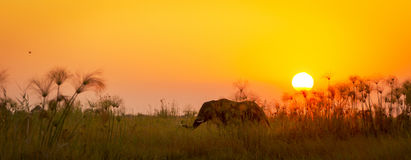 Africa Background Stock Photography
