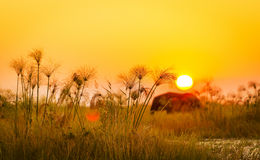 Africa Background Stock Image