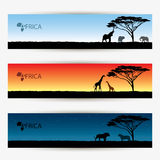 Africa banners Stock Photography