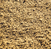 africa the brown sand dune in   sahara morocco desert line Stock Image
