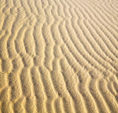 africa the brown sand dune in   sahara morocco desert line Royalty Free Stock Photo