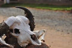 africa buffelhuvud Arkivfoton