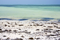 Africa coastline   the  blue lagoon relax  of zanzibar Stock Image