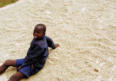 Africa Coffee. The children of coffee growers help dry coffee with their family after school Stock Photos