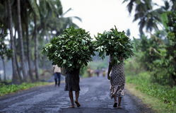 AFRICA COMOROS ANJOUAN. Farmers in a village on the Island of Anjouan on the Comoros Ilands in the Indian Ocean in Africa Stock Image