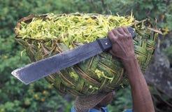 AFRICA COMOROS ANJOUAN Stock Images