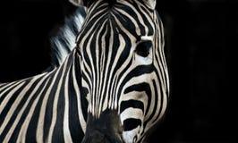 africa djur royaltyfri foto