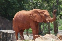 Africa elephant Stock Image