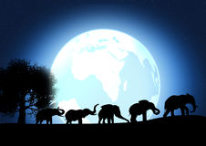 Africa elephant Royalty Free Stock Images