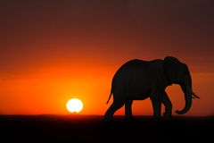 Africa Elephant Sunrise Sunset Wildlife. Artistic rendition of an elephant in Africa with either a sunrise or sunset in the background. The red, African Royalty Free Stock Photo