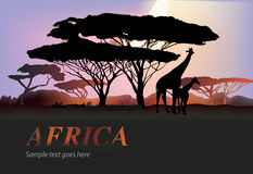 Africa elephants silhouette. With tree and orange sun,  illustration Stock Image