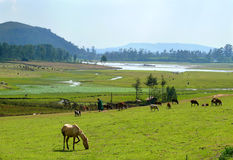 Africa, Ethiopia. Mountains amazing shape. Pasture. Horses are e Stock Photos