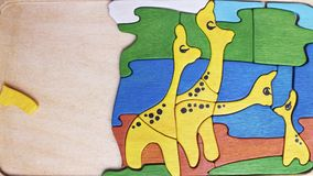 Yellow giraffes puzzle cartoon. Africa family of yellow giraffes puzzle cartoon stock video
