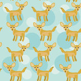 Africa Fennec Fox Seamless pattern with funny cute animal on a b Stock Image