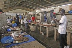 africa fishmarketgambia inbanjul Royaltyfri Fotografi