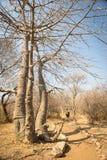 africa fotvandra Arkivfoto