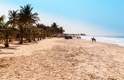 Africa Gambia - paradise beach. Paradise beach, golden sand and palm tree Royalty Free Stock Photography