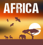 Africa - infographics and background Royalty Free Stock Images