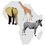 The Africa and its animals Royalty Free Stock Photos