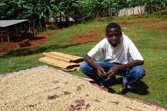 africa kaffe Royaltyfria Foton