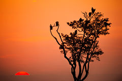 Africa Kenya sunset Stock Images