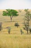 africa krajobrazowy park narodowy serengeti Zdjęcie Royalty Free