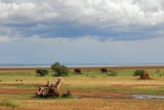 africa krajobrazowy s Obraz Stock
