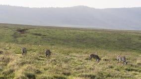 africa krateru ngorongoro Tanzania Fotografia Royalty Free