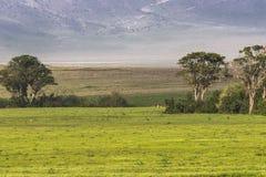 africa krateru ngorongoro Tanzania Obrazy Royalty Free